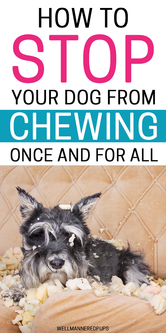 How To Stop Dogs From Chewing Stop Dog Chewing Dog Training Easiest Dogs To Train