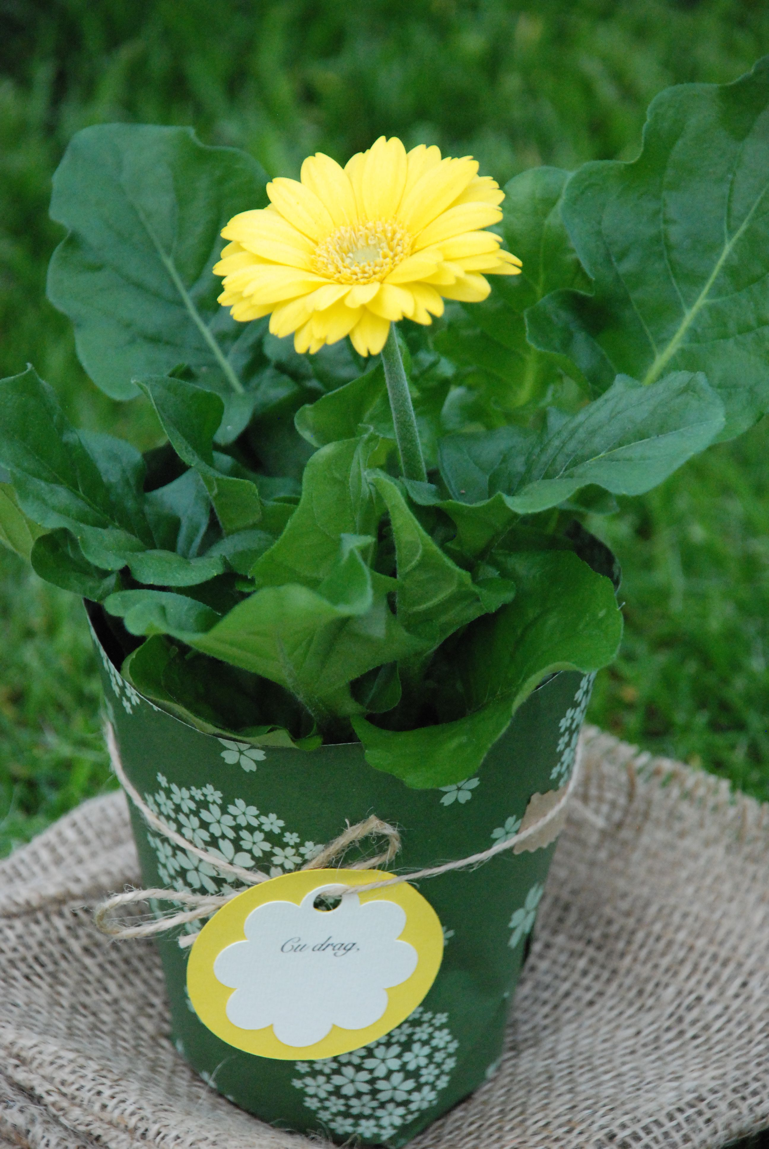 flower wedding favors plantfavors plant t gerbera pot plante m