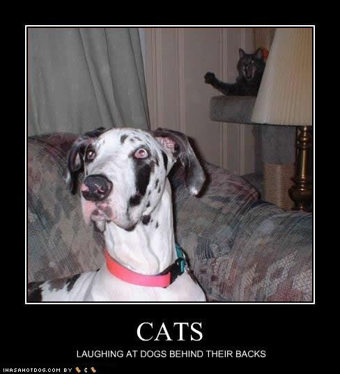Funny Cats And Dogs With Captions Funny Dog Captions Funny Cats