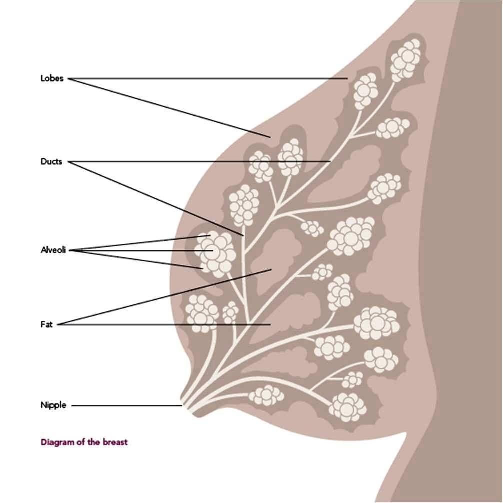 Foods to make tits grow naturally