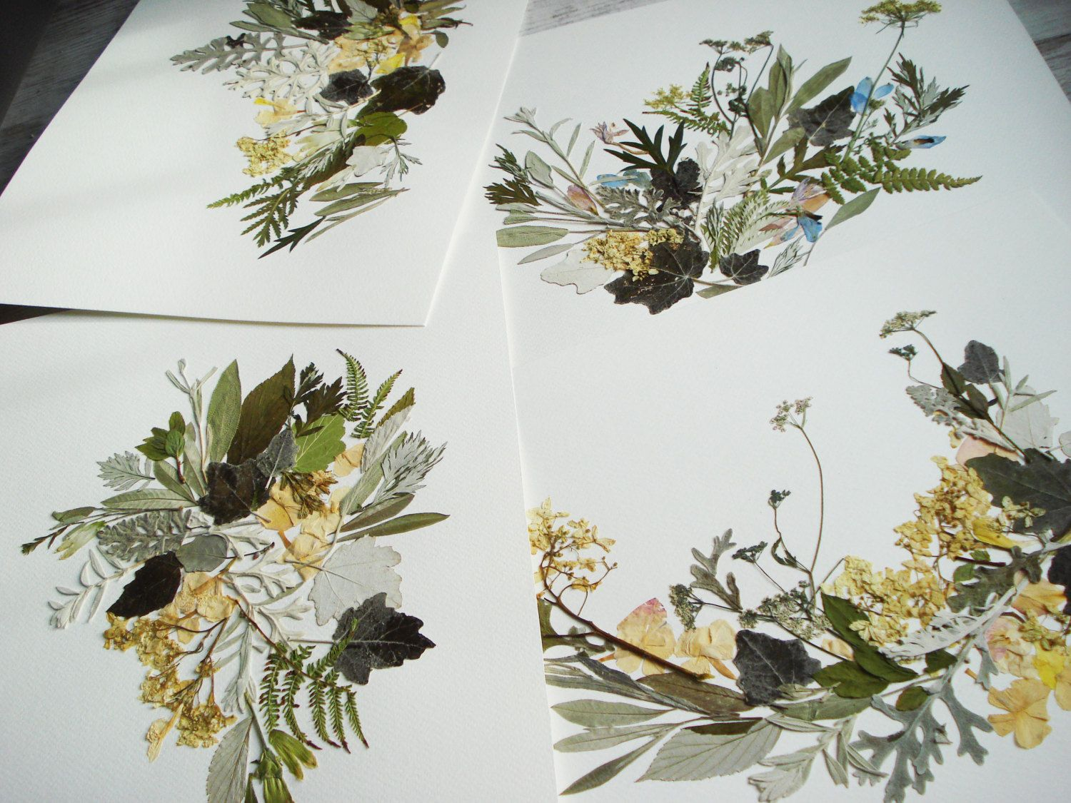 Completely new Botanical print 11''x14'' Dried flowers decor Pressed flower art  UD76