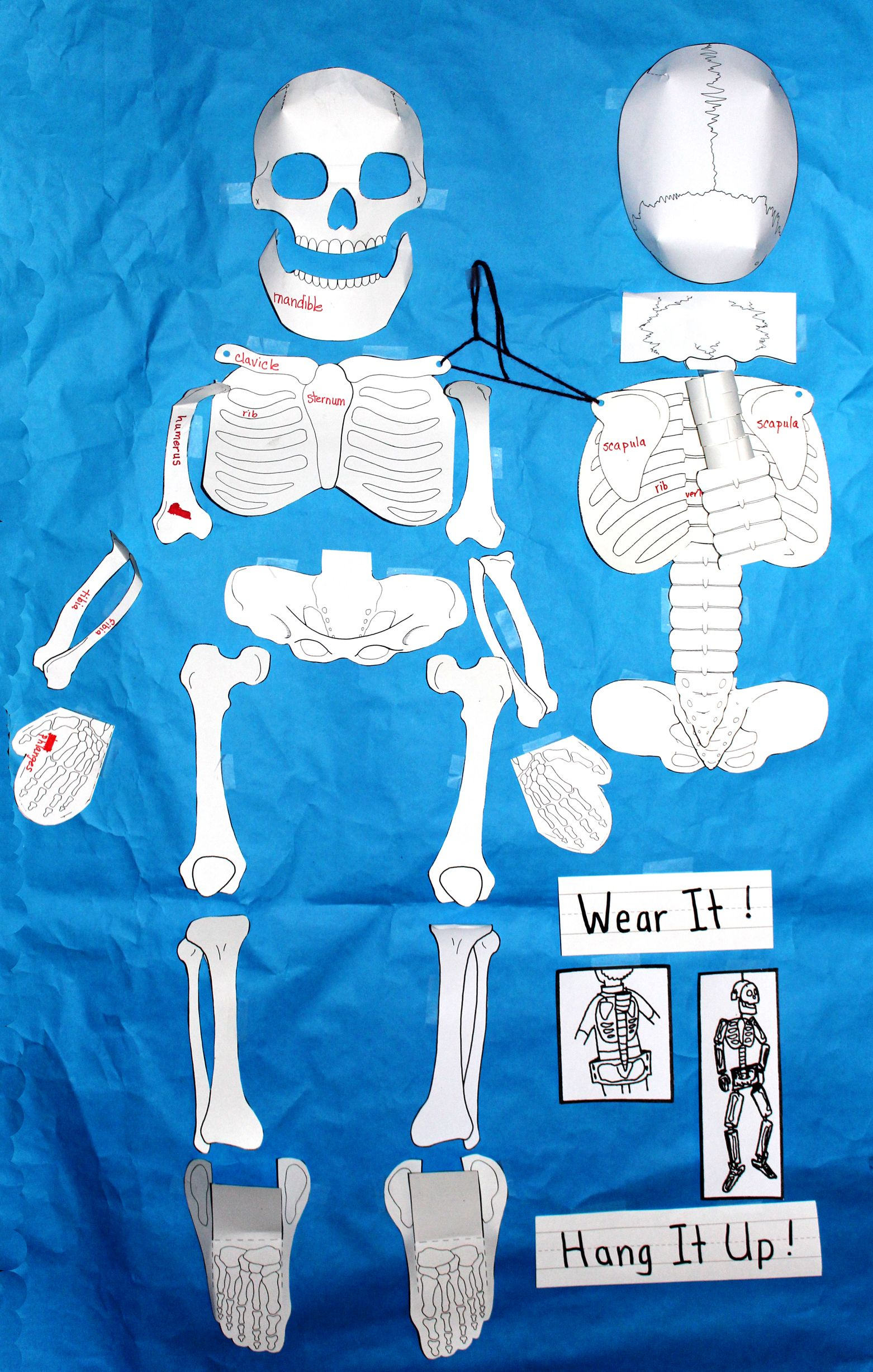 Interactive Skeleton Wear It Label It Display It Great For A