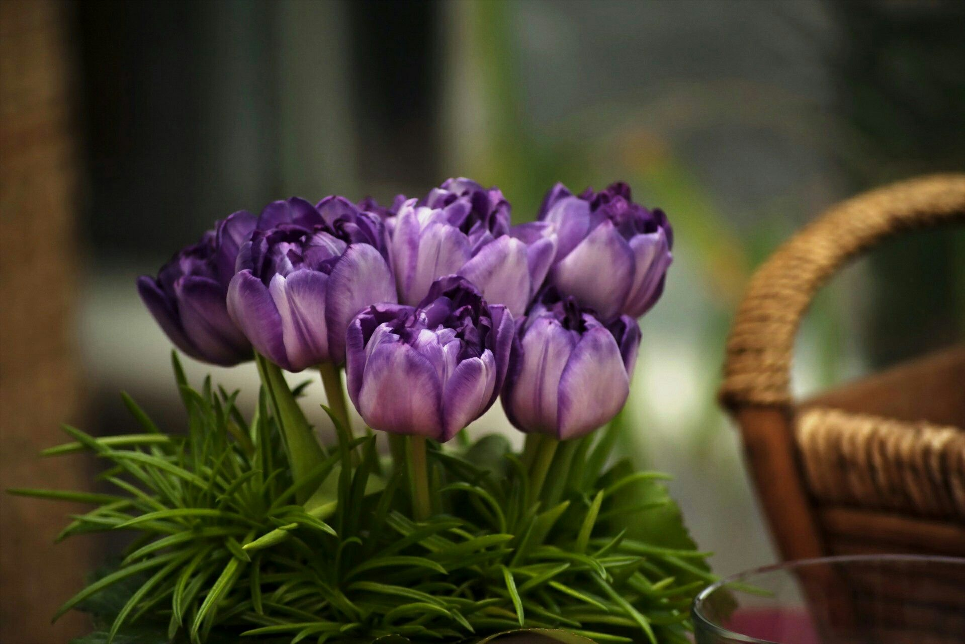Small Tulips Flowers Purple Tulips Flower Pictures