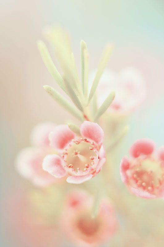 fleurs envoyer a domicile 140 fleurs bouquet god 39 s paradise pinterest fleur les fleurs. Black Bedroom Furniture Sets. Home Design Ideas