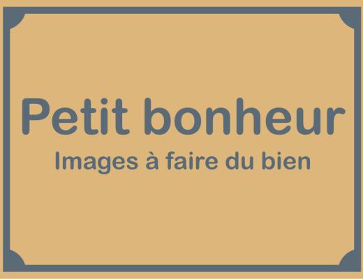 """Résultat de recherche d'images pour """"image petit bonheur"""""""