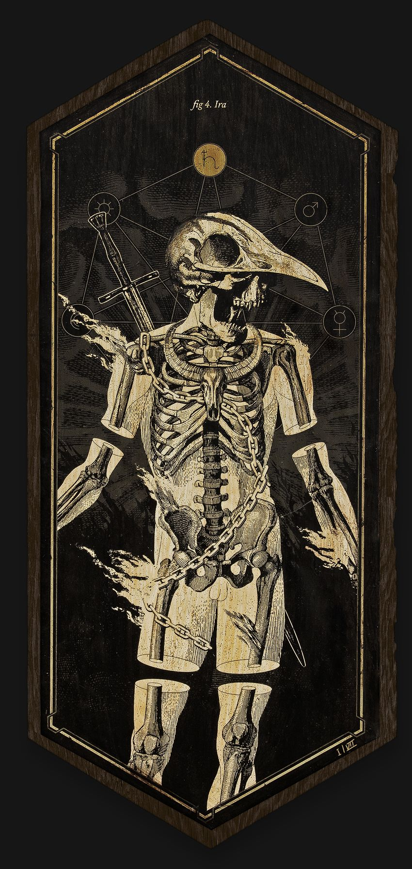 This collection draws on illustrations in old books on anatomy ...