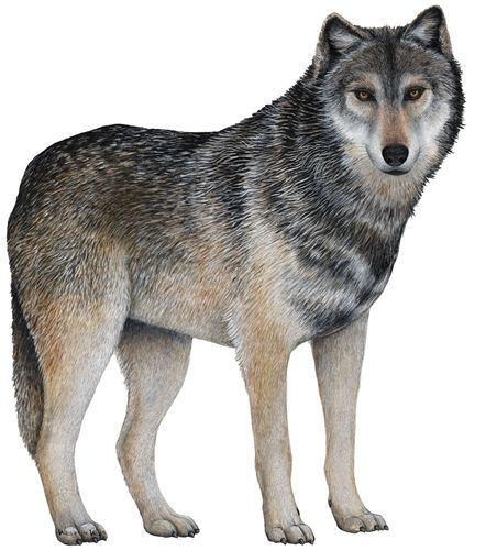 wolf wall decal animal wall decals wall decals for on wall stickers for kids id=75819
