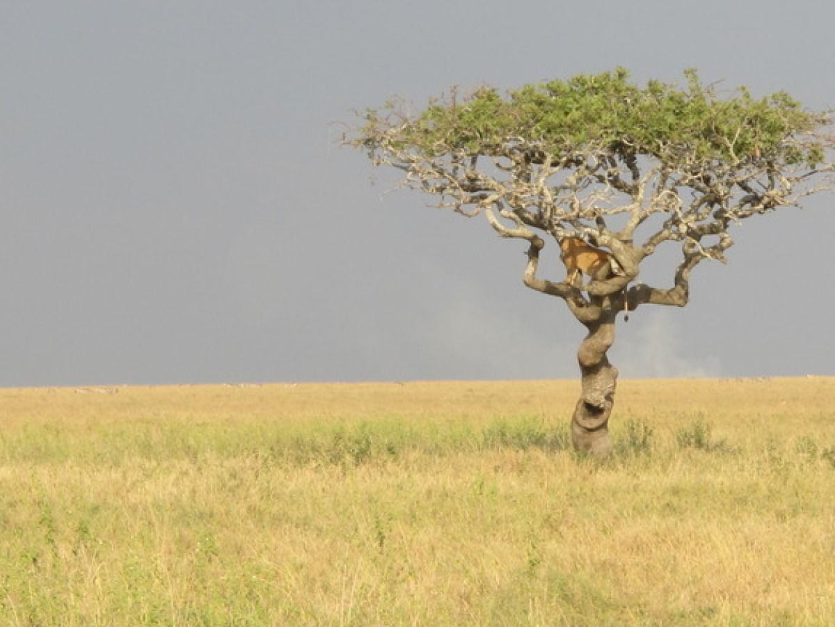 Serengeti, Tanzania~The World's 13 Most Inspiring Trees | Trippy