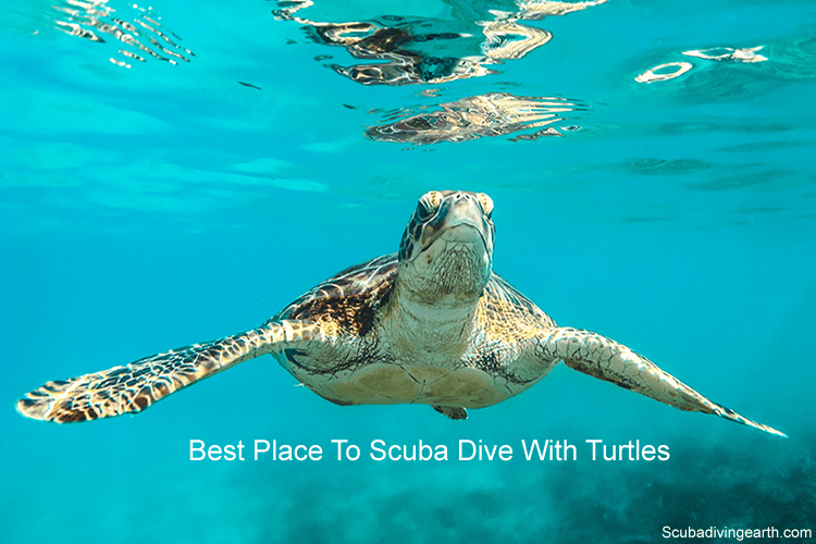 Best Place To Scuba Dive With Turtles Hawksbill Sea Turtle Sea Turtle Turtle Deep Sea Diving
