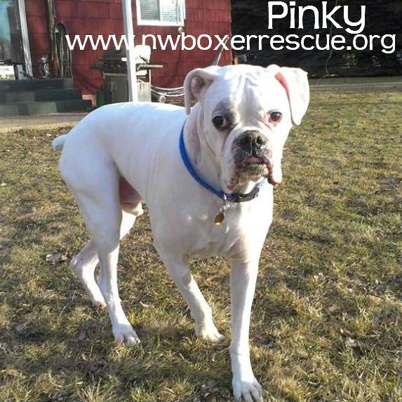 Pinky has found his furever home! Congrats Pinky