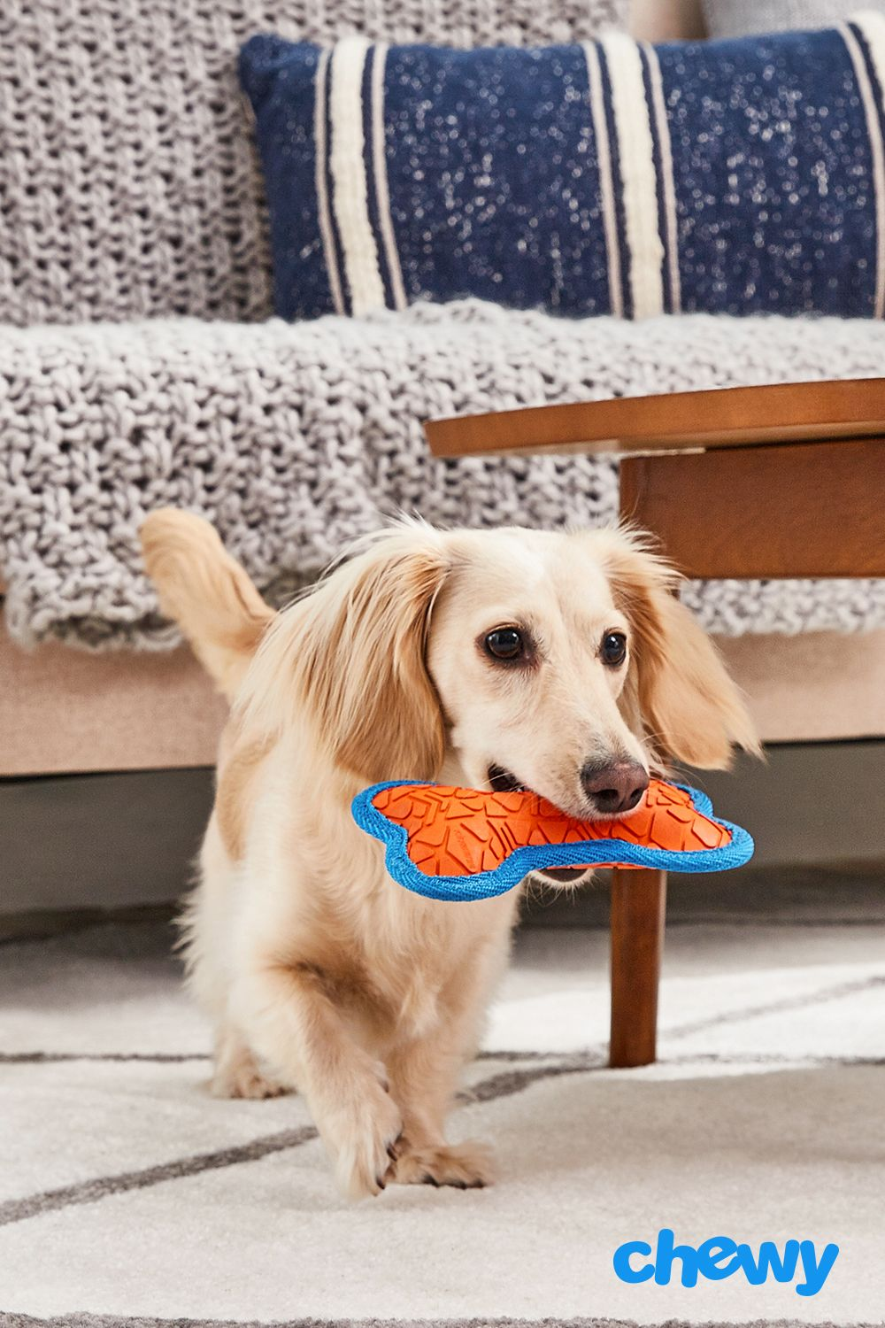Help Keep Your Small Breed Dog Active With The All Kind Toss