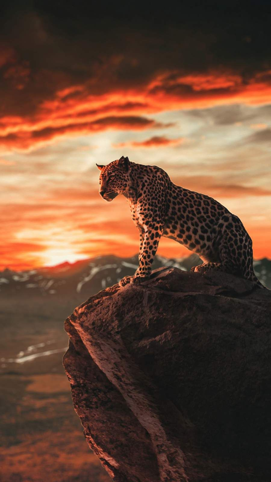 Panther Morning Iphone Wallpaper Wild Animal Wallpaper Animal Wallpaper Cutee Animals
