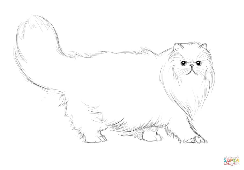 Persan chat dessin coloriage chat persan coloriages imprimer gratuits dessin en 2019 - Chat a colorier imprimer ...