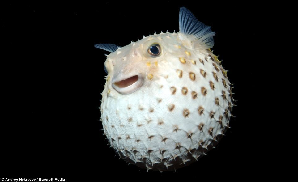 13++ Animal crossing deep sea creatures ideas