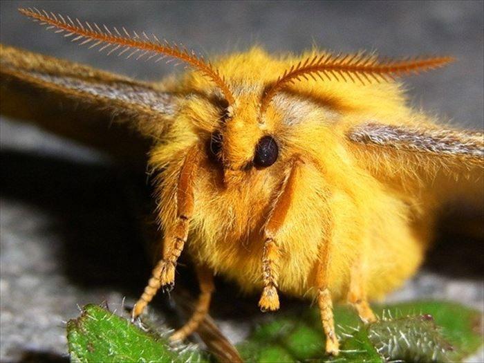 キモイ可愛い きもかわいい虫たち 昆虫画像50枚 Ailovei 蛾 虫 かわいい
