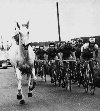 Horse Versus Bike Cycling Race Cycling Pictures Cycling Art