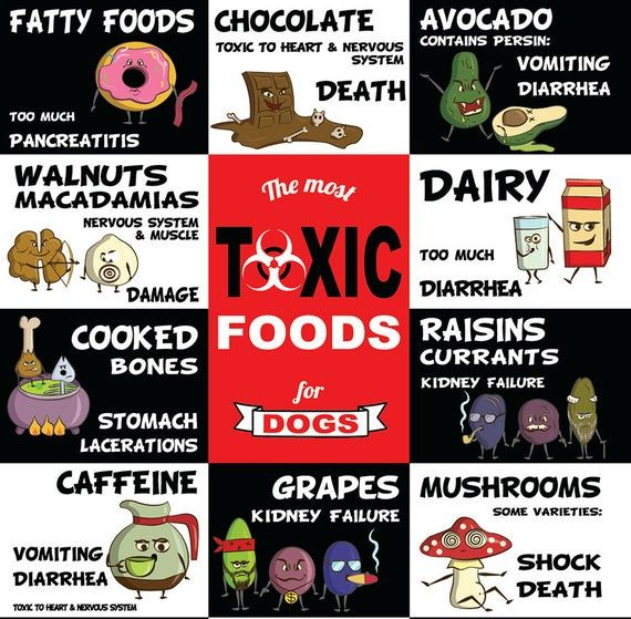 The World S Most Toxic Foods For Dogs 4 X 6 Etsy Toxic Foods For Dogs Toxic Foods Dog Food Recipes