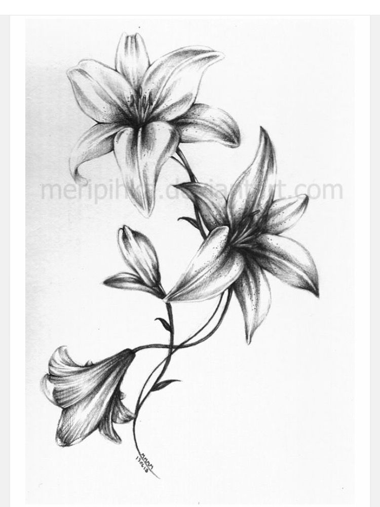 Beautiful Black And White Lily Lily Flower Tattoos Lily Tattoo Lily Tattoo Design