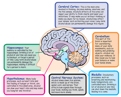 Words to describe parts of the brain interesting facts cbt fandeluxe Gallery