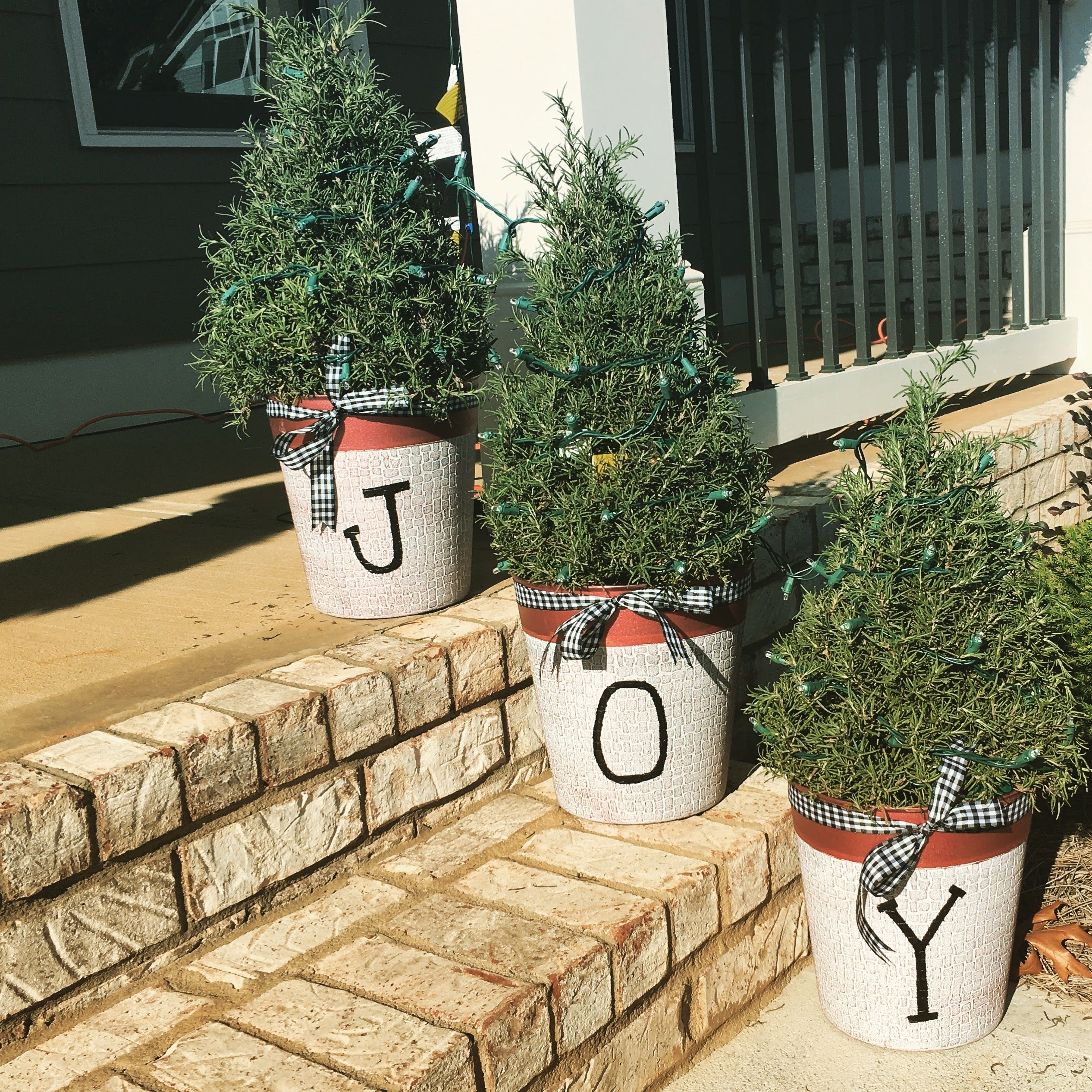 Patio rosemary trees for christmas 2016 inspired by laura