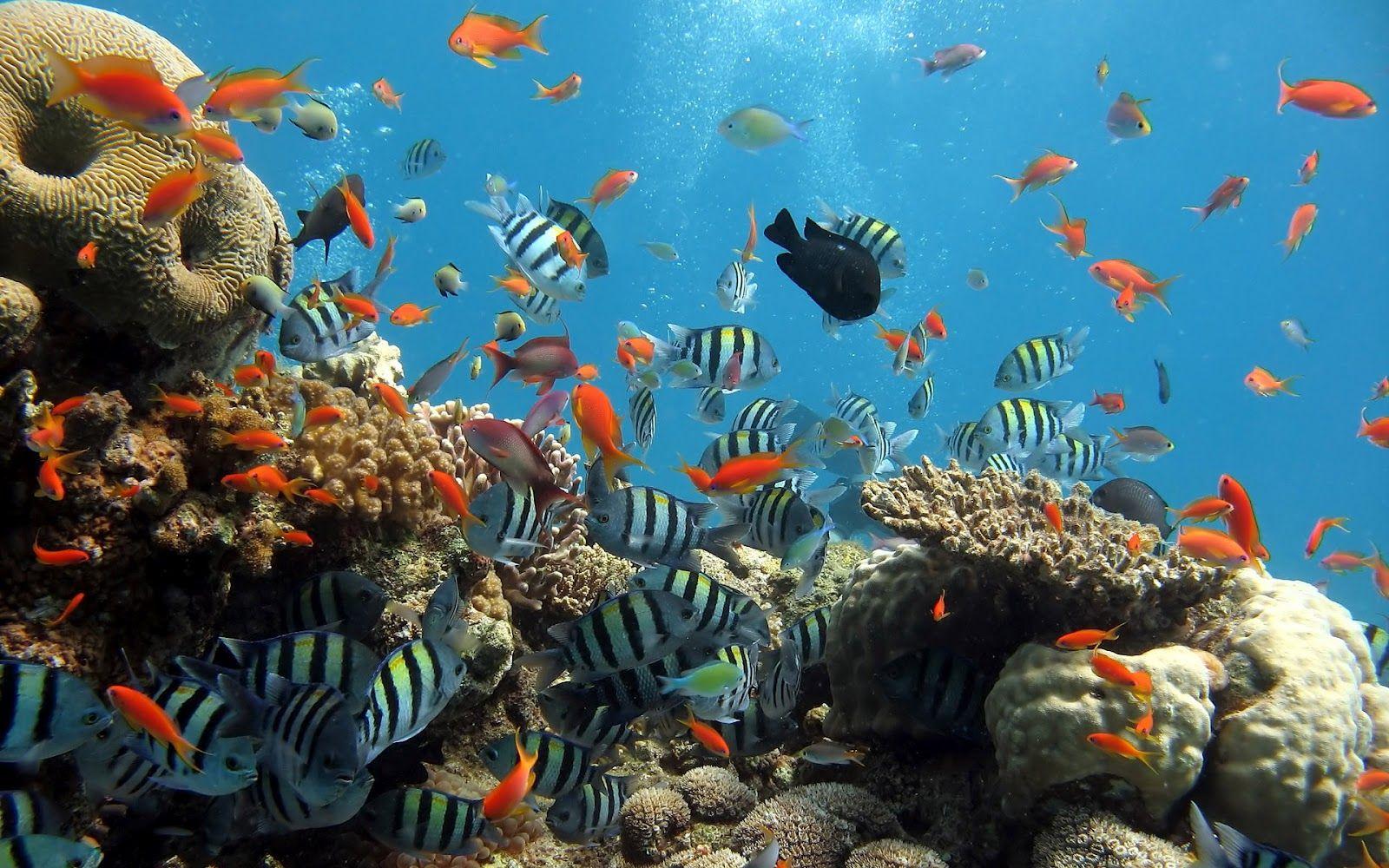 Ocean Coral Reef Plant Life