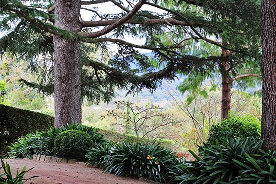 orvieto garden lilydale victoria cedars and cliveas jpg on best japanese garden for your home exterior ideas might possibly be the easy answer id=27976