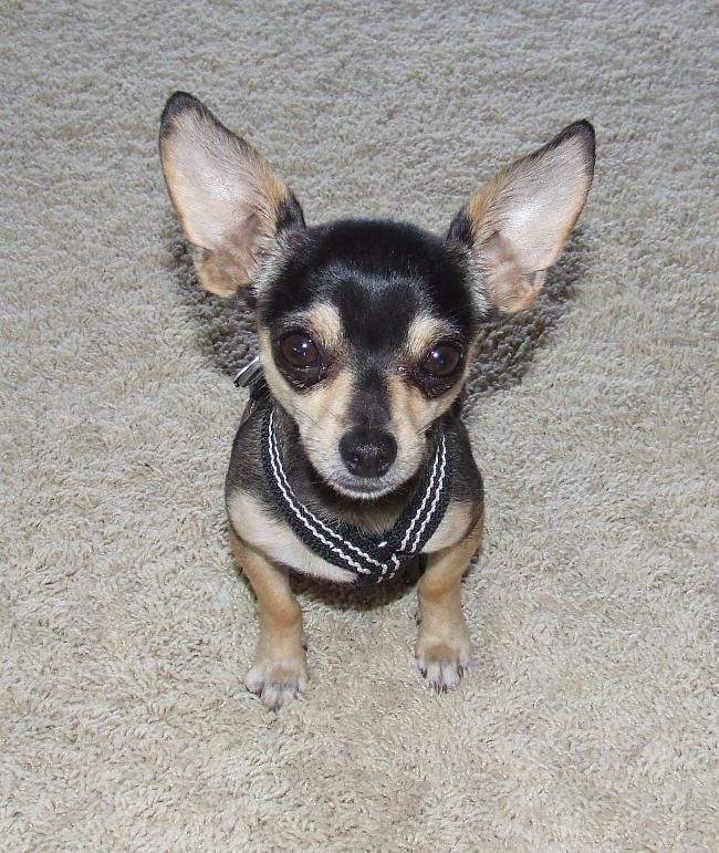 Pet House Sitter Needed Near Palm Springs Ca For 1 Week House