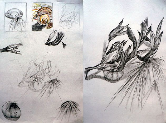 My art coursework is themed as 'nature' any idea's?