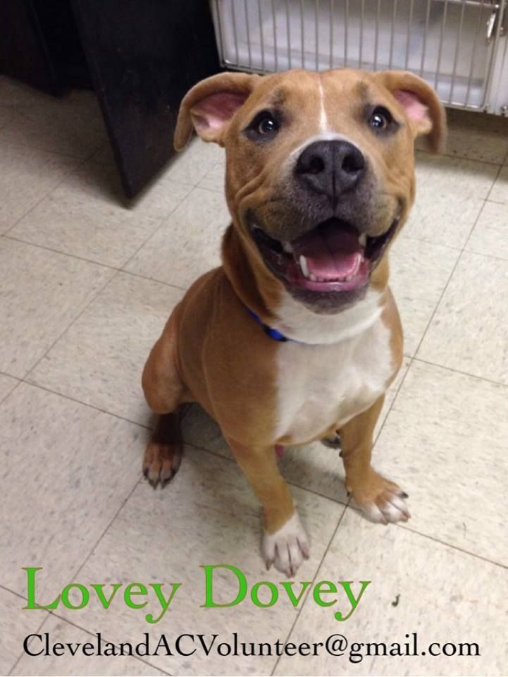 ADOPT ME! LOVEY DOVEY CLEVELAND ANIMAL CONTROL CLEVELAND