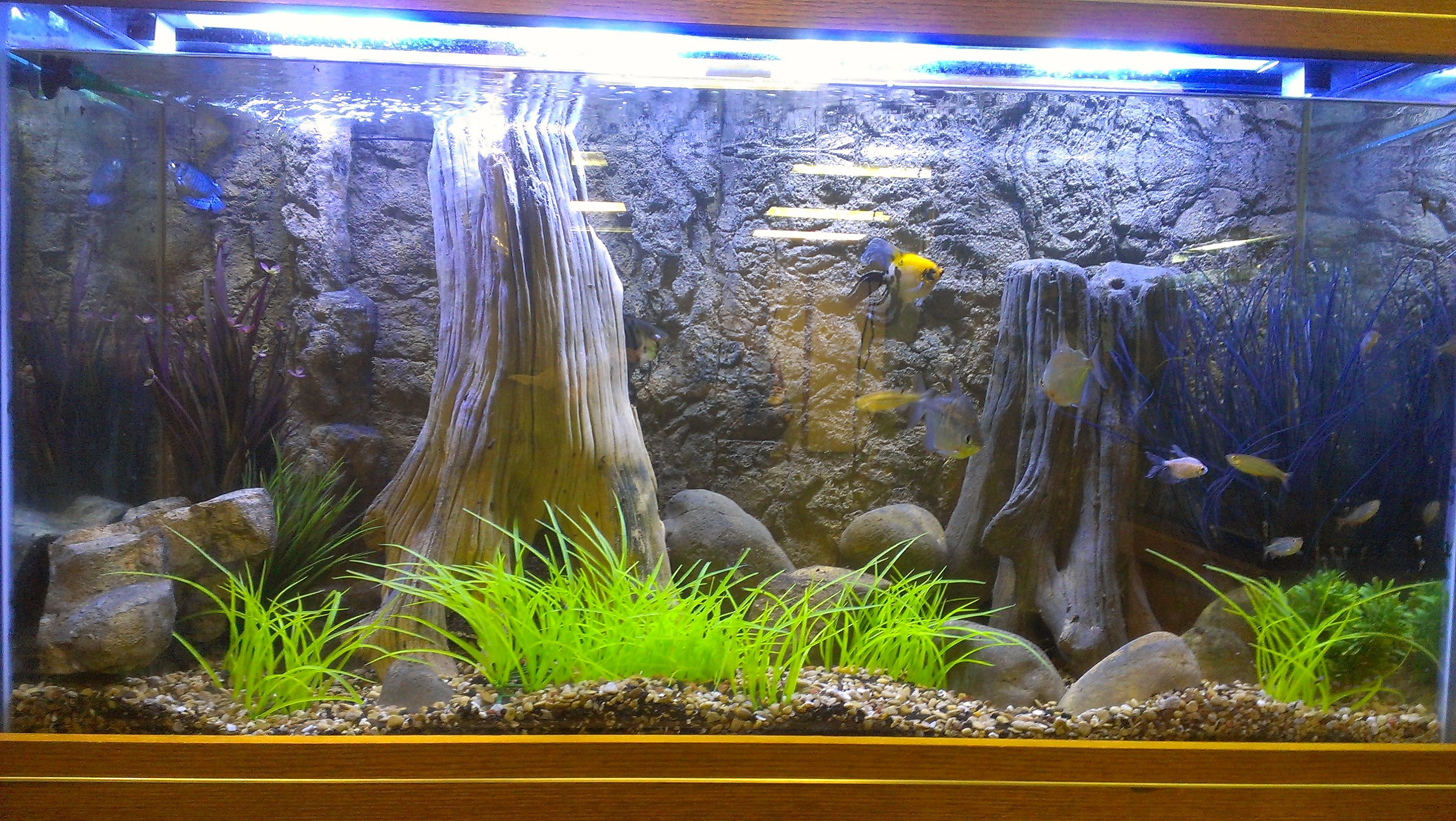 22c43c3505424a5ef0ae90284e8cee90 Incroyable De Aquarium Deco Des Idées
