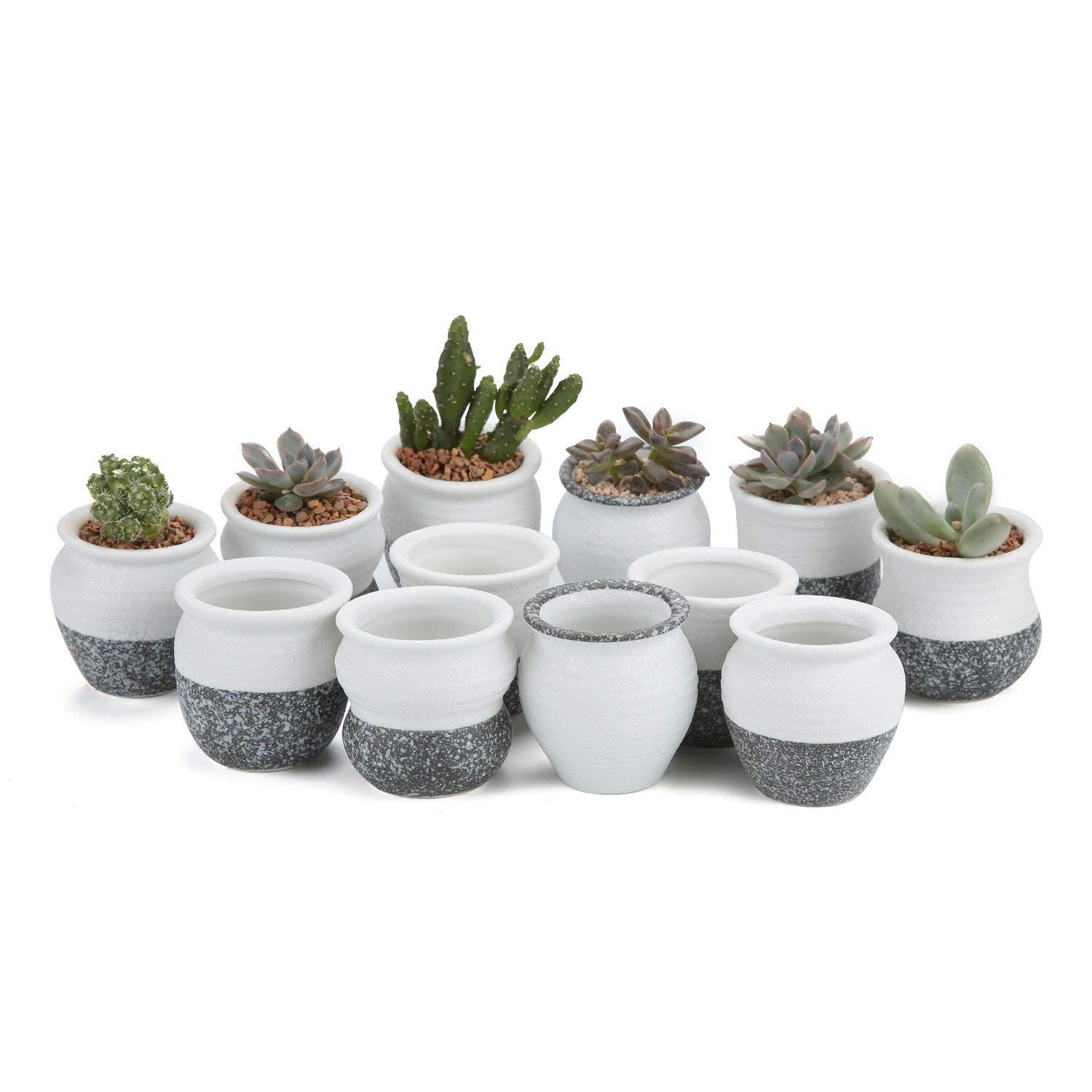 Mini Ceramic Plant Pots Perfect For Holding Succulent Herbs And Catus Plants Set Of 12 Pots Ceramic Succulent Planter Ceramic Succulent Cactus Plant Pots