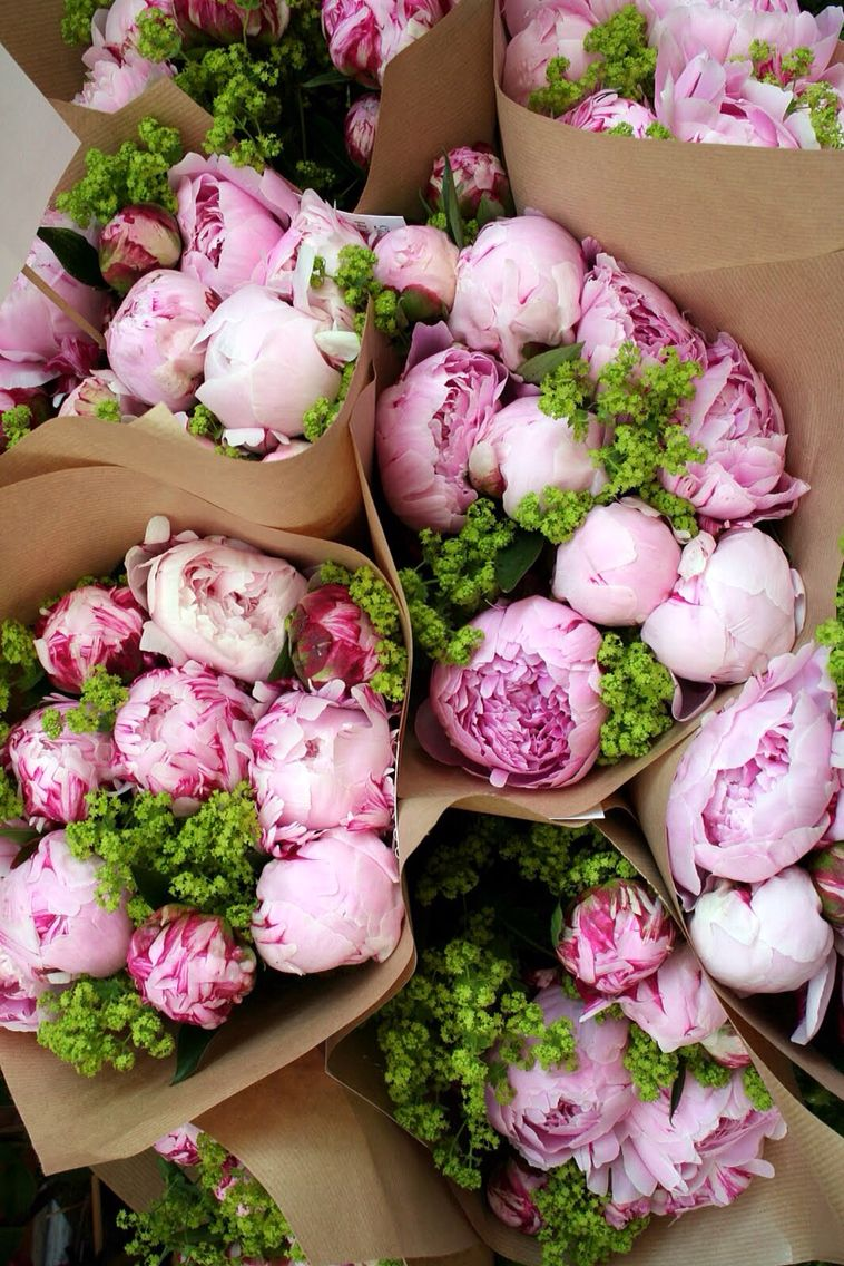 Pink Peonies Find More Cute Vintage Wallpapers For Your IPhone Android Prettywallpaper