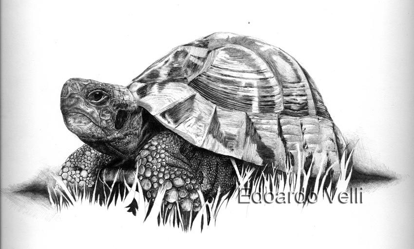 Disegno A Matita Animali Illustrations Sketches Drawing