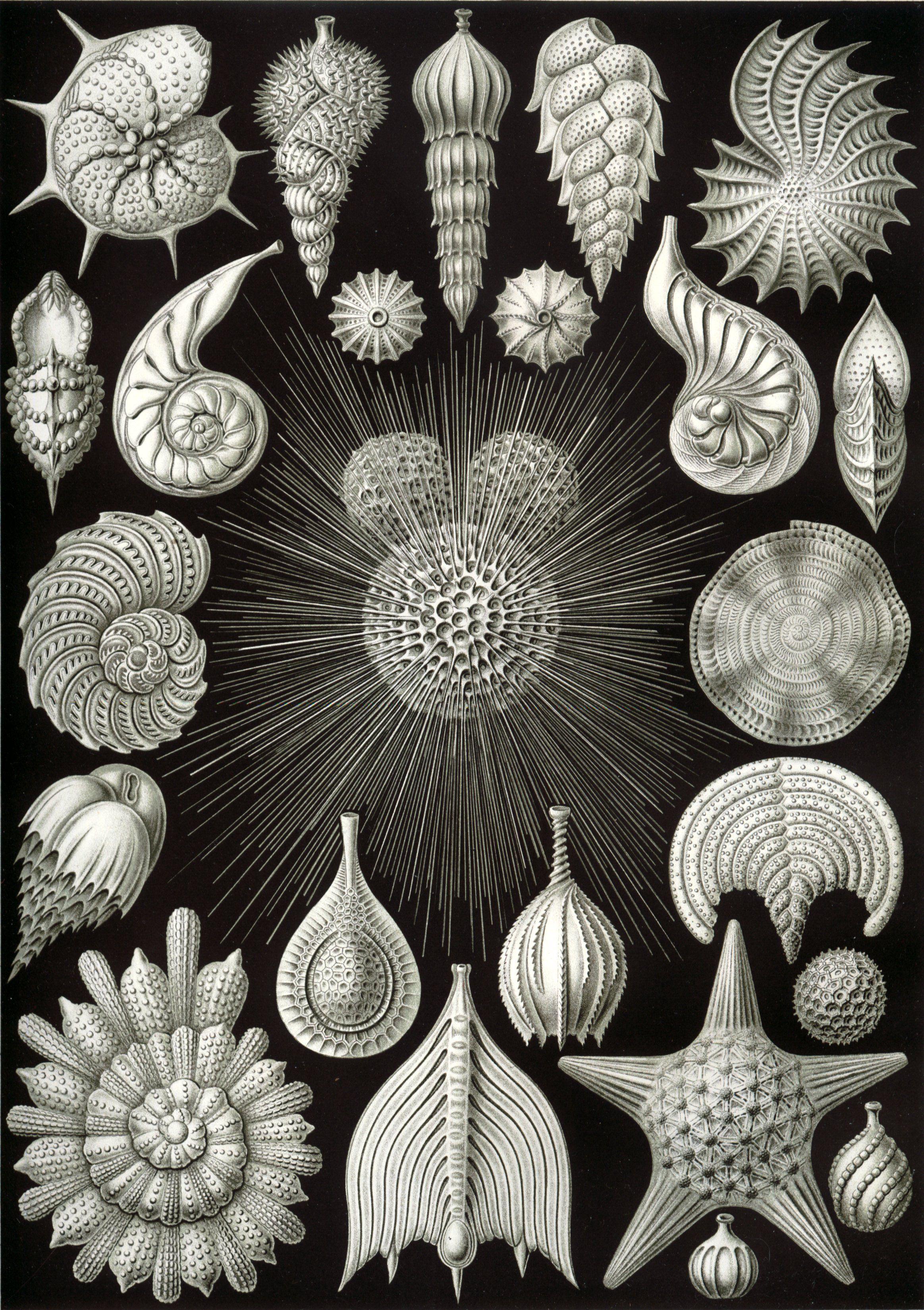 Картинки природных форм