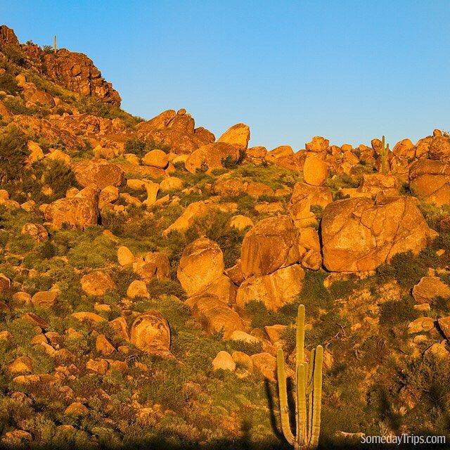 Beautiful golden hues paint rocks and cacti in #Arizona.  The desert can create some wonderful magic in nature.  It make road trip travel a visual splendor.