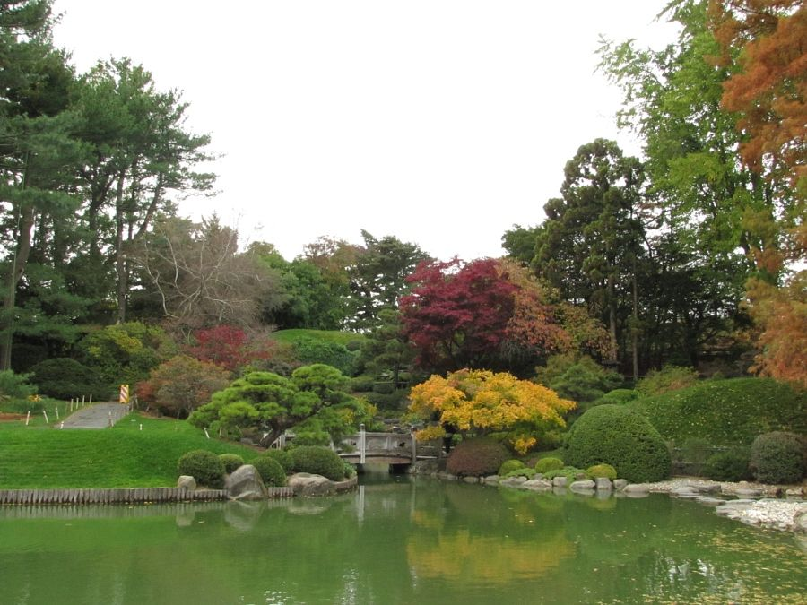 Photo Reference: Far away shot of Japanese Pond in Brooklyn Botanic Garden.
