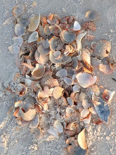 I Seashell S By The Seas Love Beach Panama City Sea