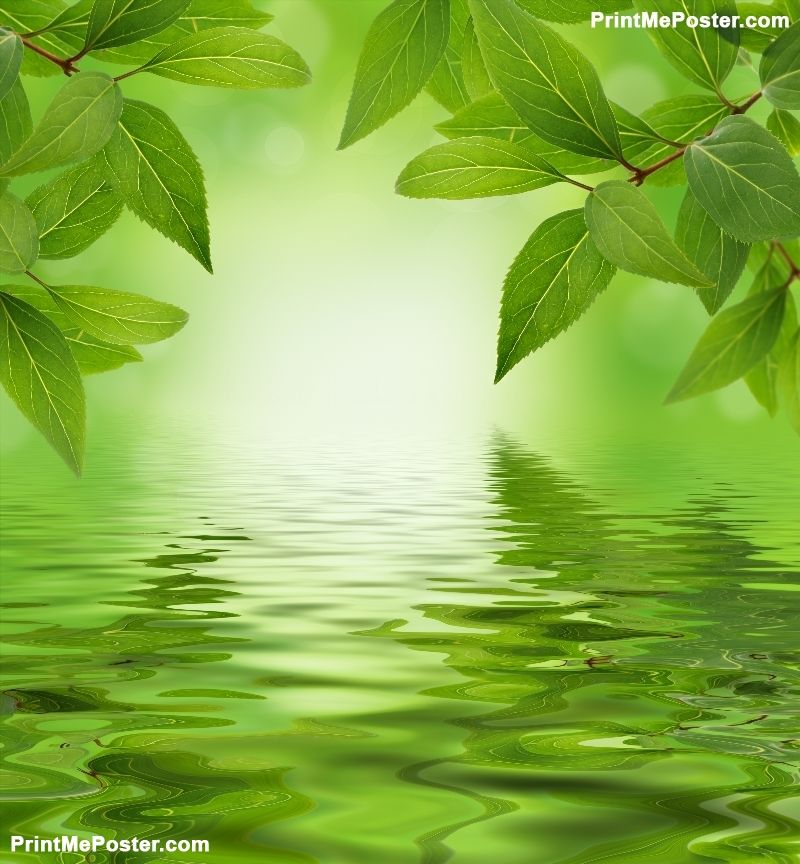Green Leaves Background Poster Id F32188772 Green Leaf Background Green Nature Green Backgrounds