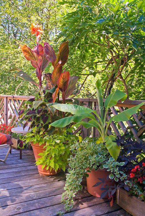 Deck Container Garden Annual Tropical Plants Plant Flower
