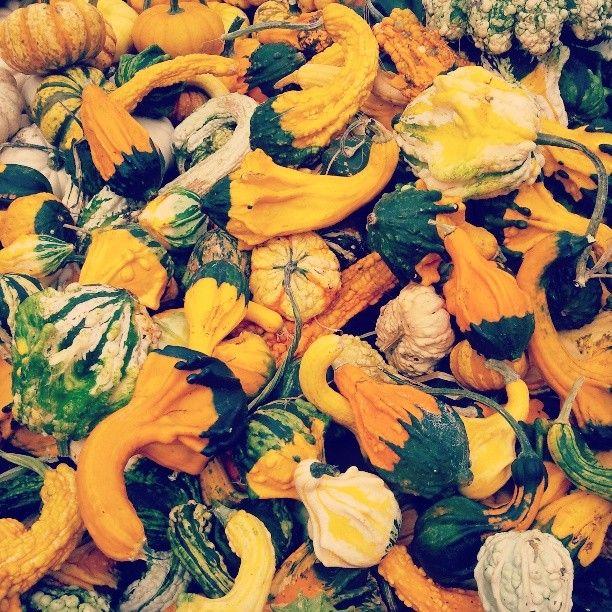 Nothing says fall like #gourds! Fort Greene Park Greenmarket #Brooklyn #farmersmarketnyc via shanns31 on Instagram