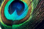 Colorful Feather by ~tallgirl2315 on deviantART