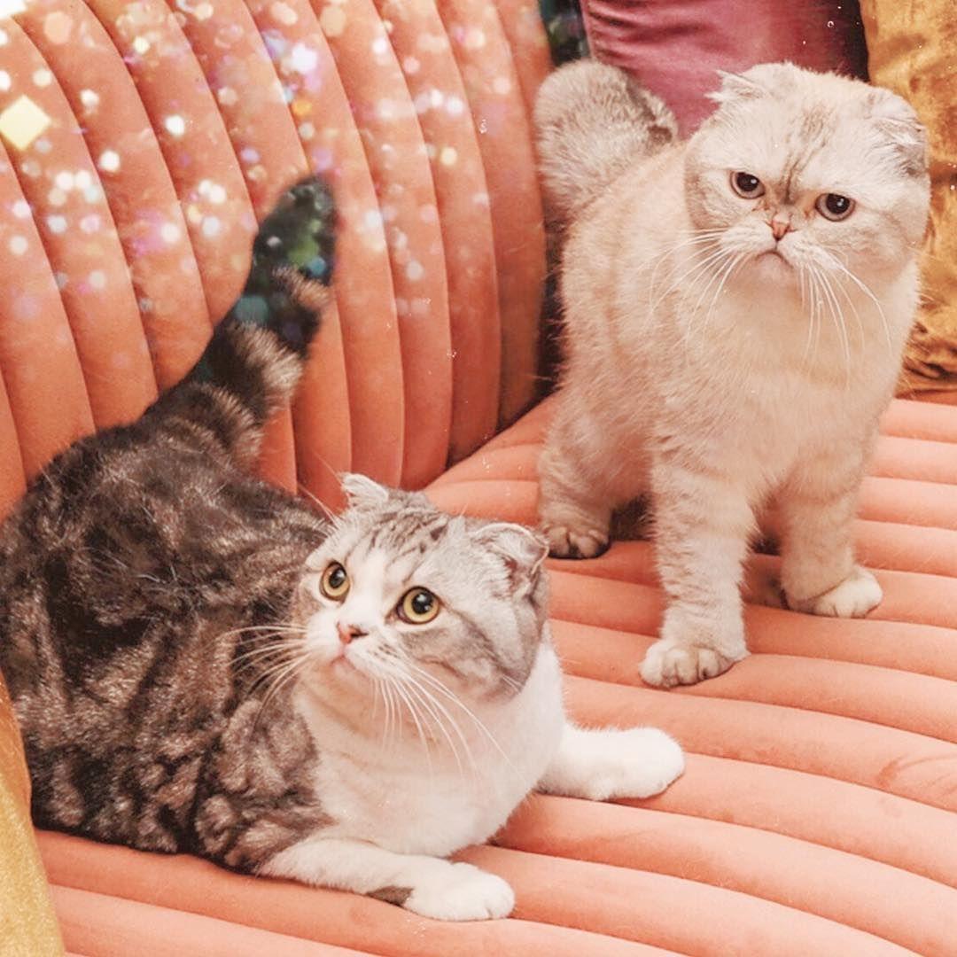 """Taylor Swift on Instagram """"4.26"""" Taylor swift cat"""