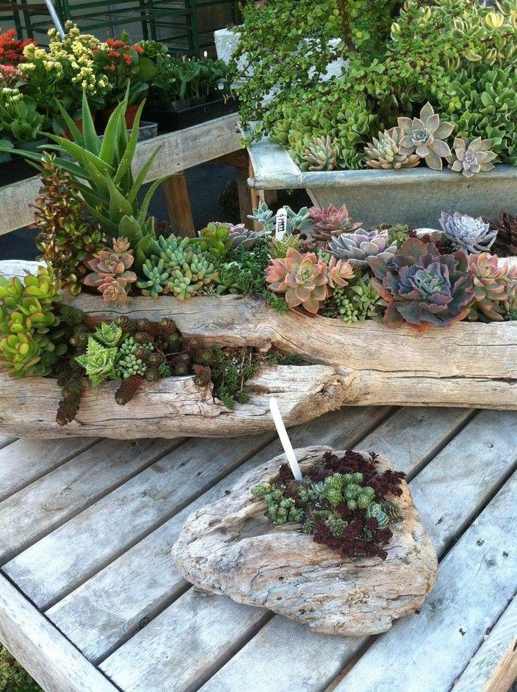 D co bois flott et plantes succulentes avec des troncs d for Deco jardin pinterest