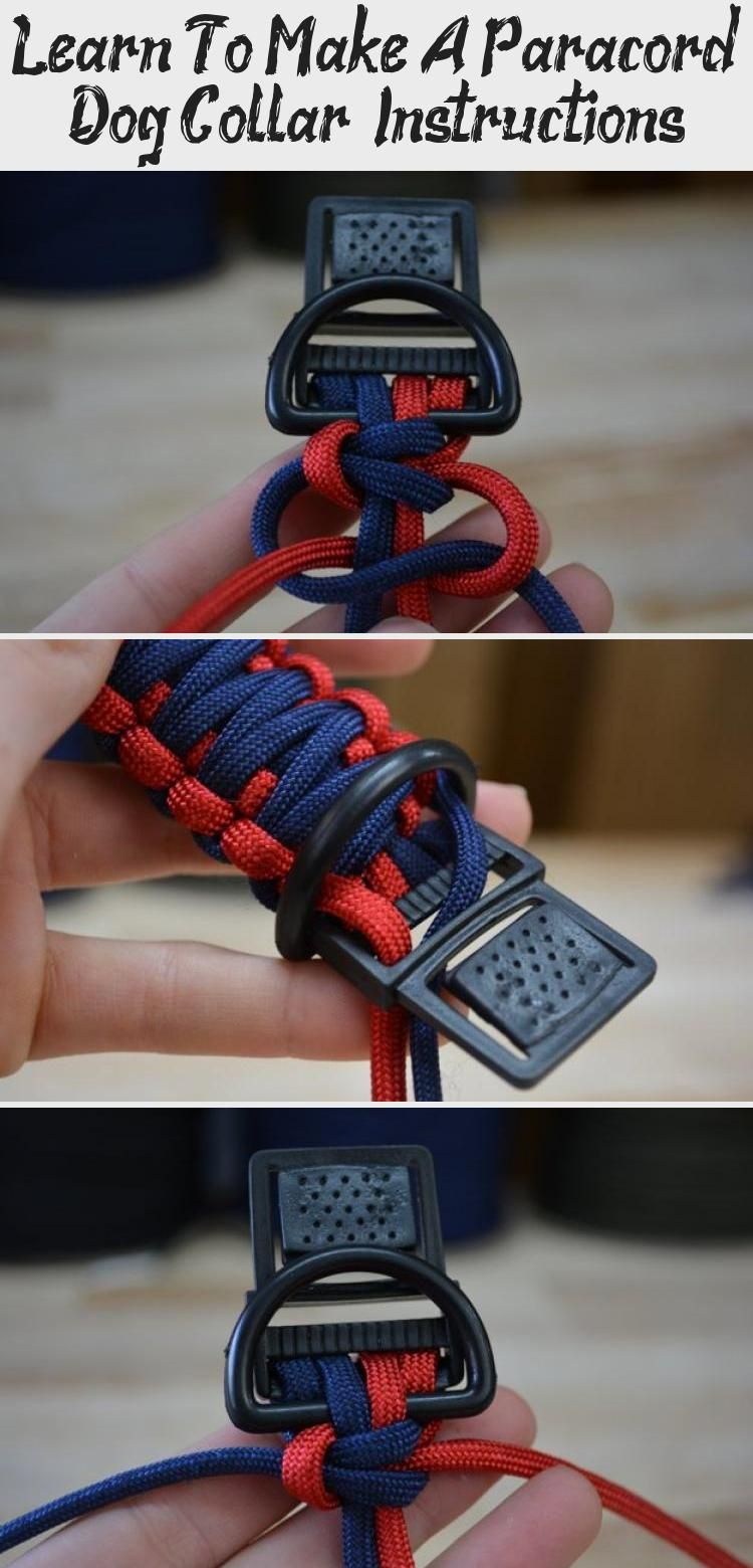 Learn To Make A Paracord Dog Collar Pet Fashion Humane Society Paracord