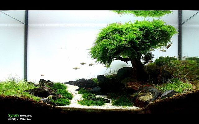 the famous christmas moss aquascape