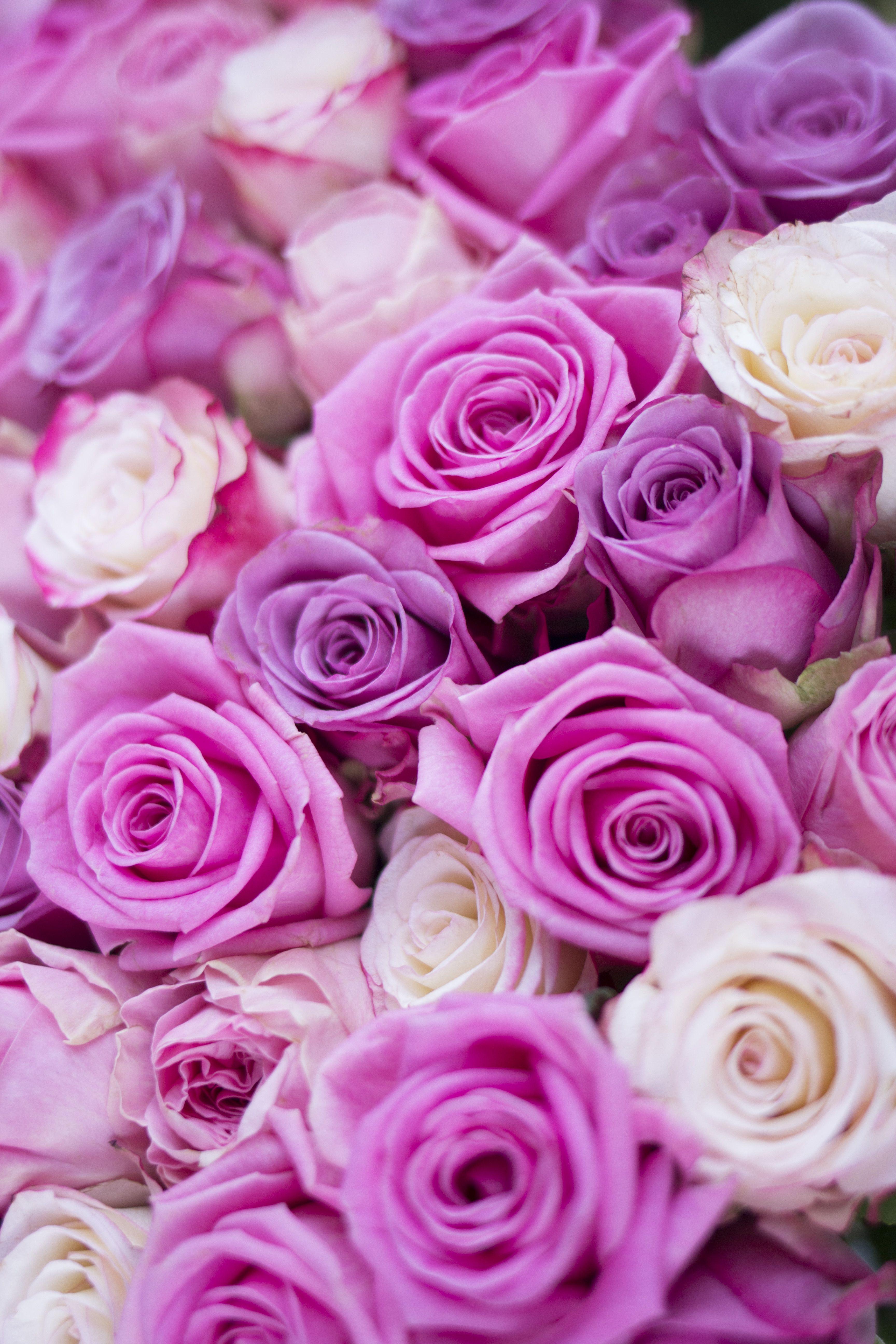 Flowers in paris by marleen serné quaintrelle flowers