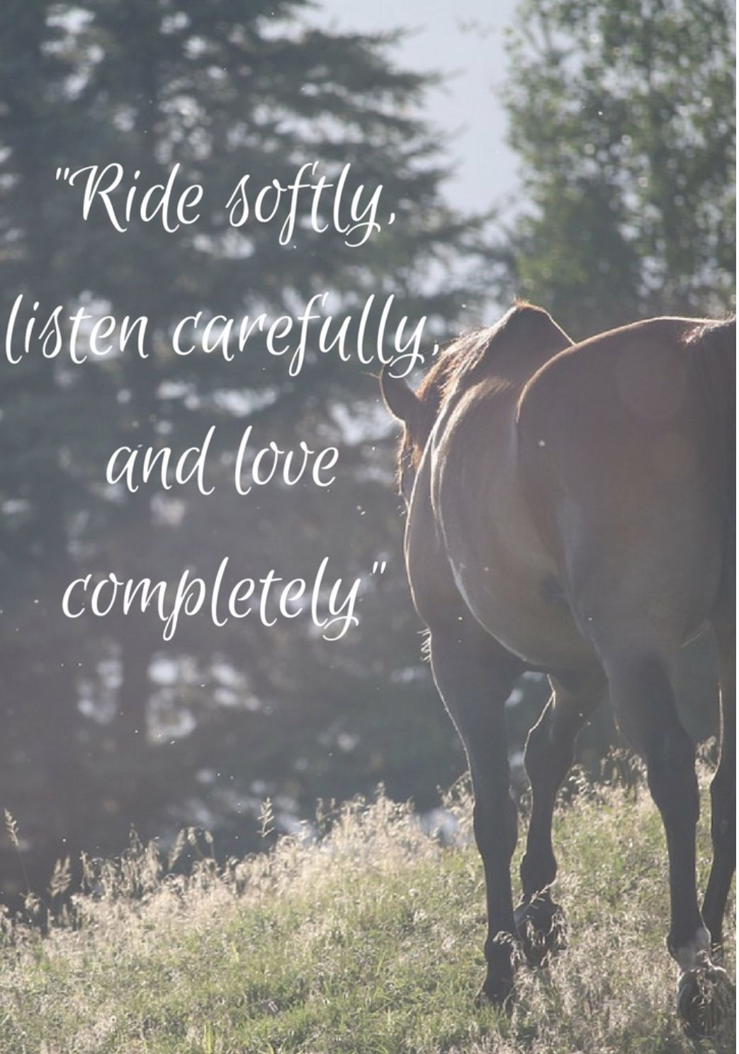 Pin by Elizabeth Alderson on Horse quotes Inspirational