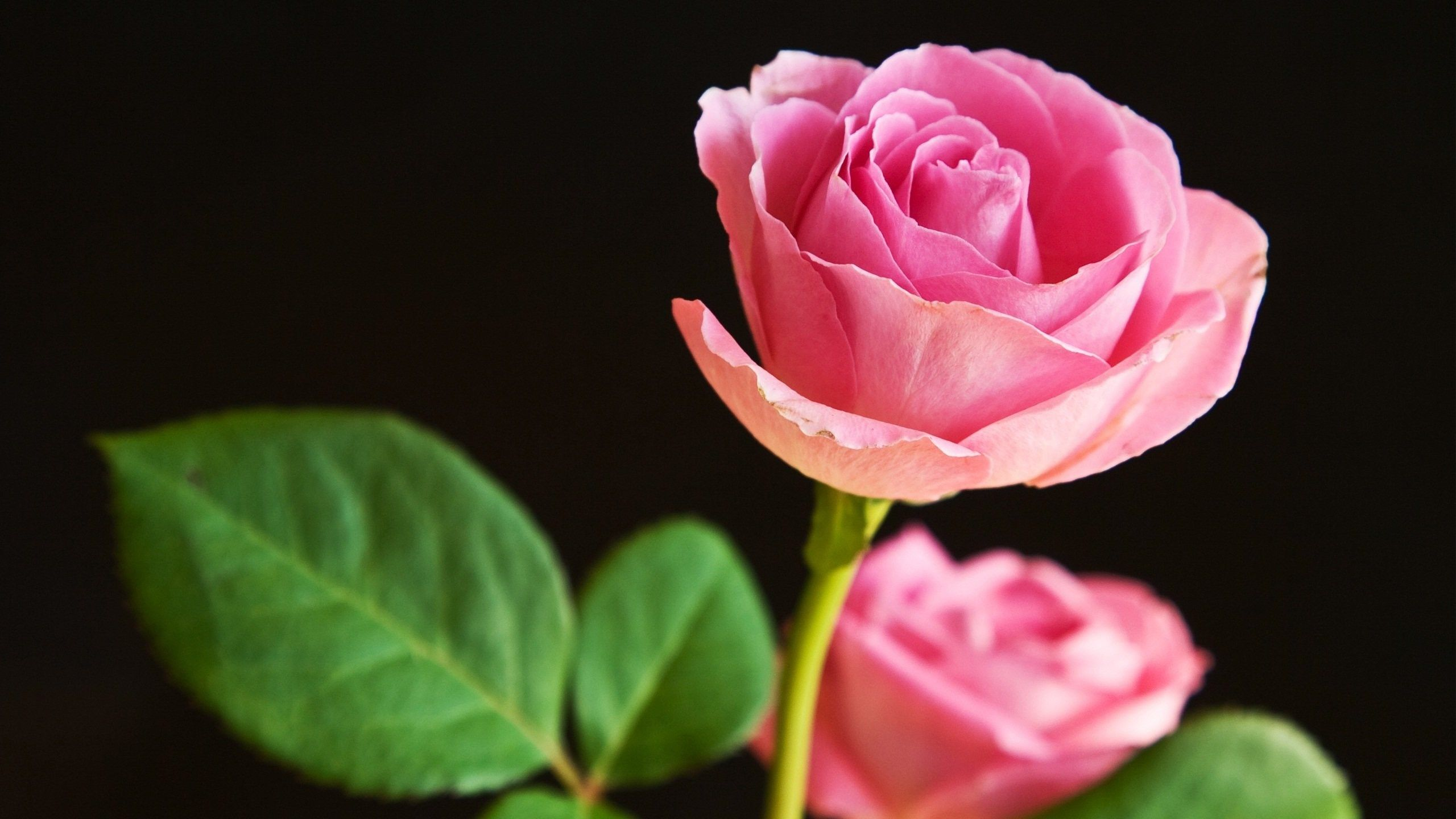 Beautiful Flowers World Desktop Pictures Nature Ololoshenka