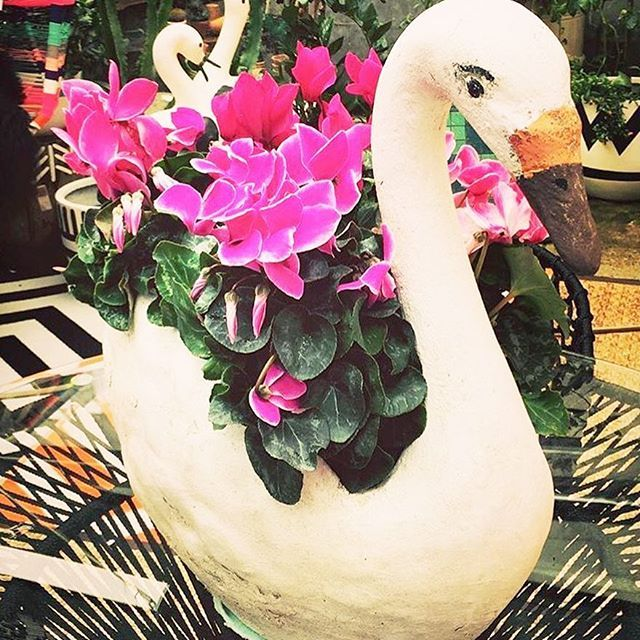 Hello Spring, it's so lovely to see you!  If you pop by the store be sure to check out our little family of vintage concrete animals. They are for sale just not online yet. Sorry 🌷🌺🌼🌸 #fentonandfenton #fentonandfentonsummer #fentonandfentonoutdoors #conreteswan 📷@jolibluebird