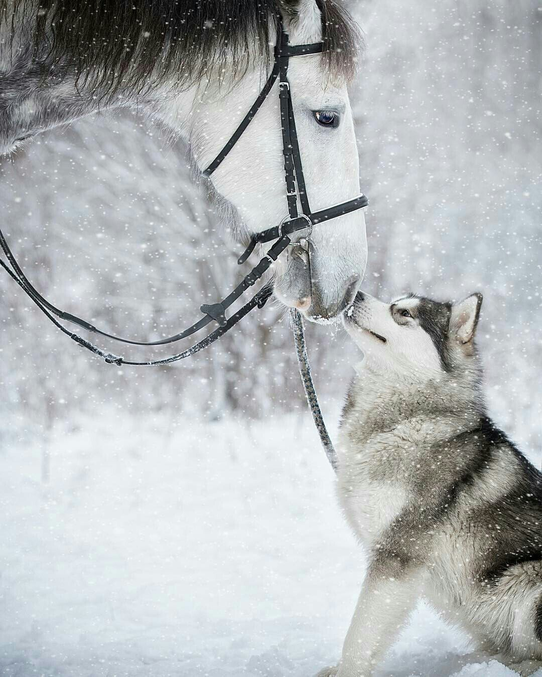 Horse And Malamute Horses And Dogs Animals Beautiful Horses